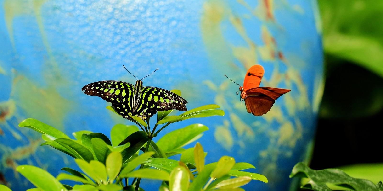 Blooms & Butterflies