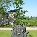 Tree of Life, Future Tense