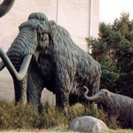 Family of Woolly Mammoths