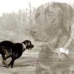 Maria Palmer: Doggy 2 Face