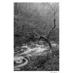 Rose Klockner Photography LLC: Chaos_Looms.jpg