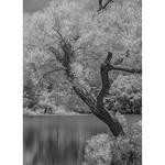 Rose Klockner Photography LLC: Silver_Summer.jpg
