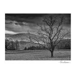 Rose Klockner Photography LLC: Stormy_Morning__bw_.jpg