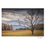 Rose Klockner Photography LLC: Stormy_Morning__color_.jpg