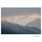 Rose Klockner Photography LLC: W_10x15_Brightening_Day.jpg
