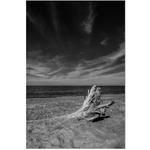 Rose Klockner Photography LLC: W_10x15_Driftwood.jpg